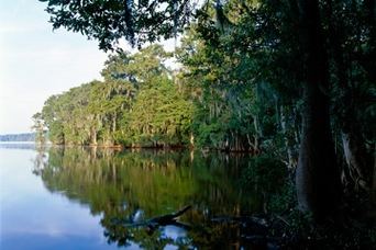 Newnan' Lake Gainsville Florida